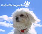 the Pet Photographer